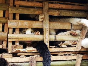 Entierran tres toneladas de gatos importados ilegalmente en Vietnam
