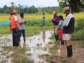 Moyobamba: dos mil 881 hectáreas de cultivos colapsan por inundaciones