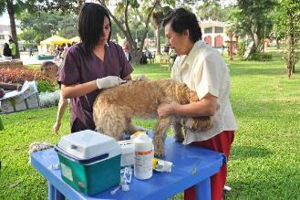 Cusco: campaña de vacunación a perros y gatos este 10 de febrero