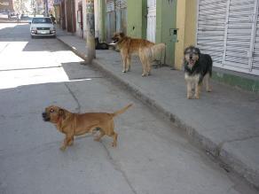 Salud reforzará vigilancia tras detectarse casos de rabia en Arequipa