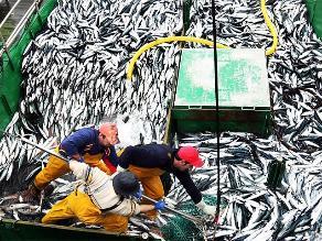 Imarpe: Biomasa de anchoveta se recupera en el sur del país