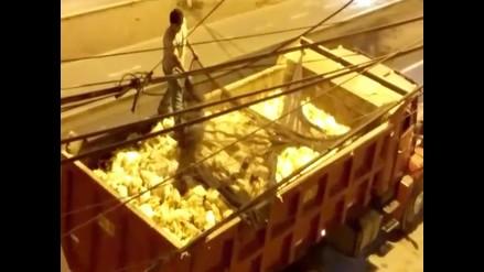 Pollos son trasladados en pésimas condiciones en el interior de un tráiler