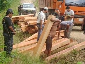 Tumbes: decomisan más de 3 mil pies de madera