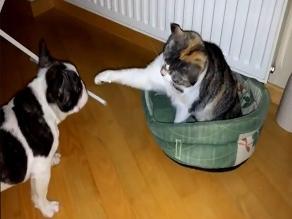 YouTube: perro y gato se enfrascan en una tierna pelea por una cama