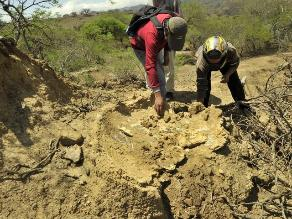 Hallan en Bolivia fósiles de mamíferos gigantes de la última glaciación