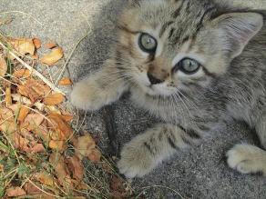 Seis consejos para mejorar la calidad de vida de tu gato