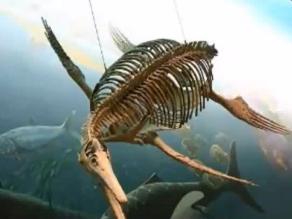 Fósil almacenado en un museo inglés es una nueva especie de ictiosauro