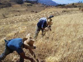 Planes de negocio para agricultores sumaron S/. 326 millones