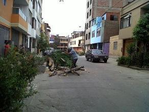 Talan árboles en urbanización de La Victoria