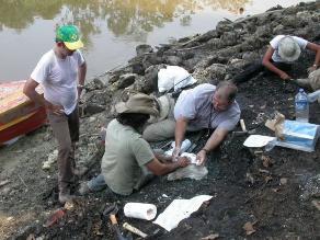 Descubren fósiles de cocodrilos prehistóricos en la Amazonía peruana