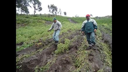 Huancavelica: más de 800 hectáreas perdidas por granizada
