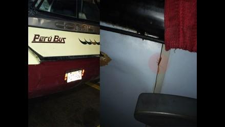 Captan cucarachas al interior de un bus interprovincial