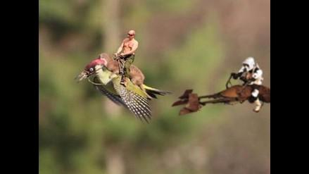 Twitter: Pájaro carpintero protagoniza memes