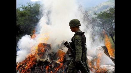 ONU: cultivo de coca baja en Perú gracias a programas alternativos