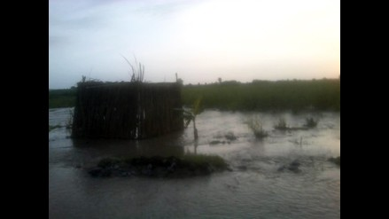 Ica: incremento del caudal del río Pisco afecta hectáreas de algodón