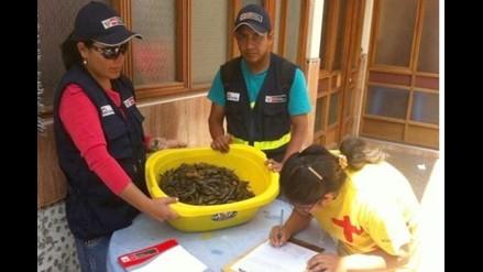 Arequipa: incautan mil kilos de camarón y macha en periodo de veda