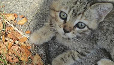 YouTube: gato se esconde y golpea a otro hasta noquearlo