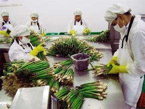 Minagri: Agroexportaciones sumaron US$ 422 millones en enero