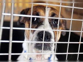 Facebook: Buscan 80 mil firmas para ley contra maltrato animal