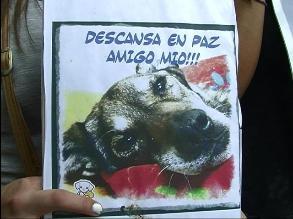Arequipa: procesan a ciudadano que causó muerte de can