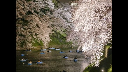El 'sakura' embellece la primavera japonesa