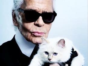 Conoce a Choupette, el gato mejor pagado del espectáculo