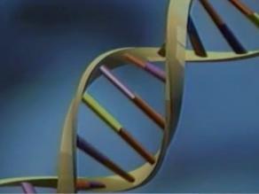 Prueba de ADN de la sangre es más eficaz para detectar síndrome de Down