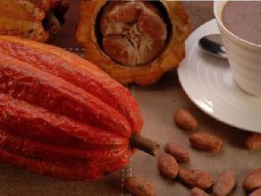 Un componente del cacao podría prevenir la diabetes tipo 2