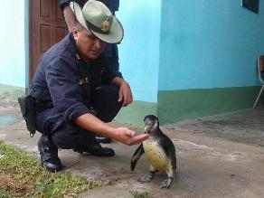 Cerca de 50 animales en cautiverio fueron recuperados en Chiclayo