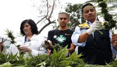 El cannabis puede ayudar a frenar el desarrollo del cáncer