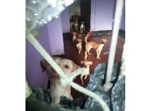 Perros abandonados pasan hambre en departamento de La Victoria