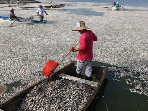 Brasil: Retiran 37 toneladas de peces muertos de laguna en Río de Janeiro