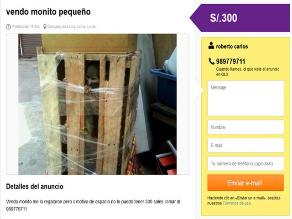 ¡Indignante! Ofertan un mono en una página de ventas por internet