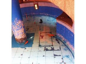 Denuncian maltrato de peces en el Centro de Lima
