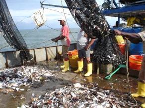 Chimbote: suspenden pesca de anchoveta desde mañana