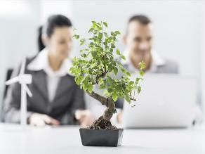 Tener plantas en la oficina mejora la productividad de los trabajadores