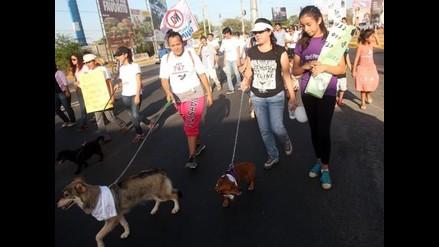 Nicaragua: Decenas marcharon por los derechos de los animales