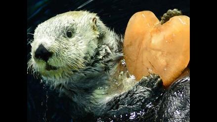 Animales en peligro de extinción que no figuran en el doodle de Google
