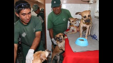 La Victoria: Mayoría de canes rescatados ya tiene nuevo hogar