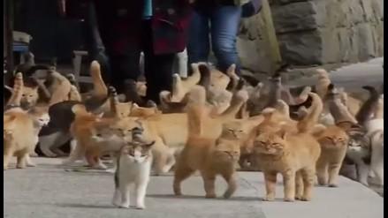 EE.UU.:Encarcelan a anciano por alimentar gatos callejeros