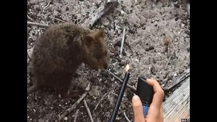 YouTube: podrían ir a la cárcel por prender fuego a un animal en extinción