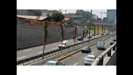 WhatsApp: Palmeras son atadas en avenida Javier Prado