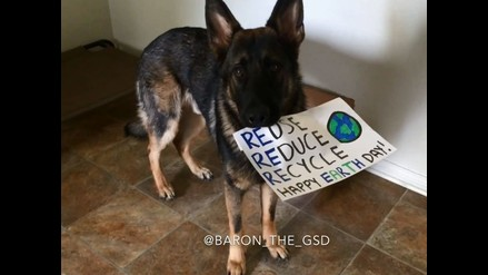 YouTube: este perro te muestra la importancia de reciclar