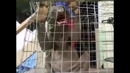 YouTube: encuentran una extraña criatura en China