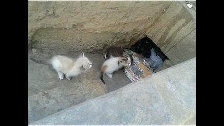WhatsApp: abandonan gatos por canal de regadío en Puente Nuevo
