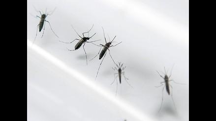 Determinan cómo los mosquitos escogen a sus víctimas