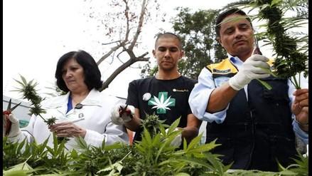 Brasil facilita la importación de derivado de la marihuana con uso médico