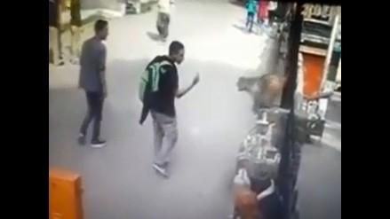 YouTube: adolescente hizo gesto grosero a un mono y esto fue lo que sucedió