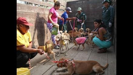 Trujillo: municipio de La Esperanza aprueba ordenanza contra maltrato animal