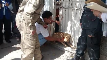 Rescatan a más de 20 canes encerrados en vivienda en Arequipa